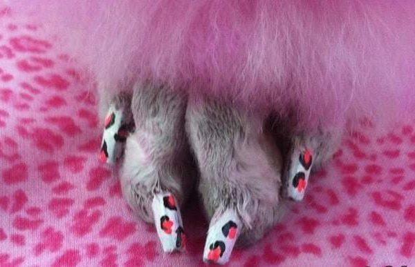 nail design idea for dogs