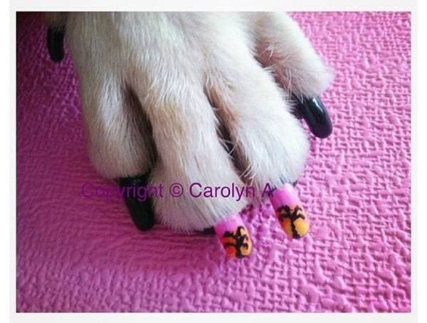 little dog cute nail design idea
