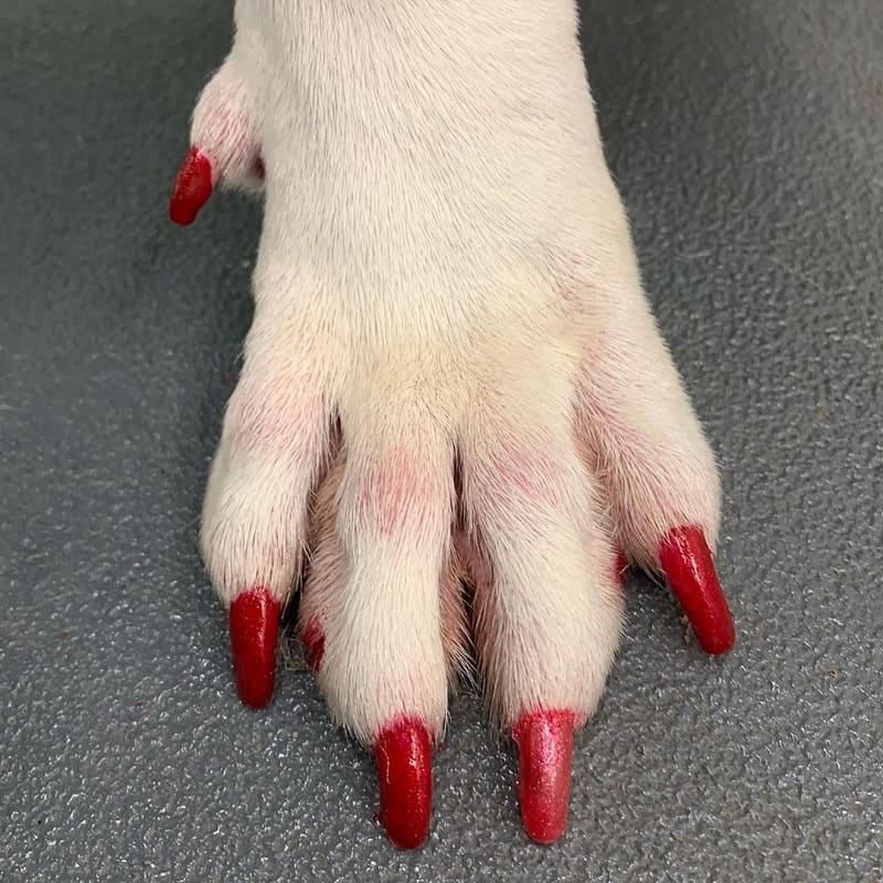 dog red nail polish