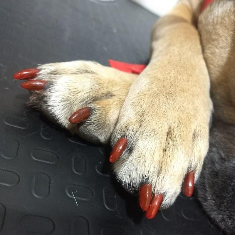 dog gel nail polish