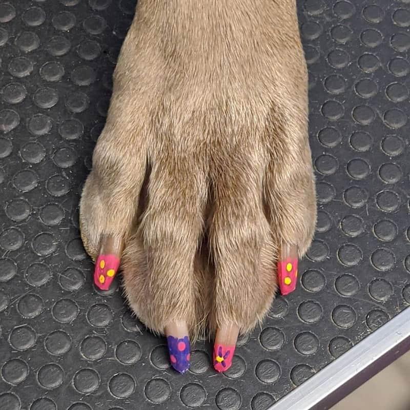 dog acrylic nail polish