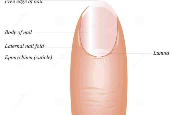 what are nails made of